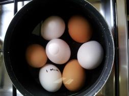 Eggs3 (4)