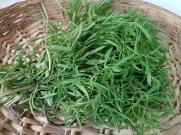 Thyme fresh (2)